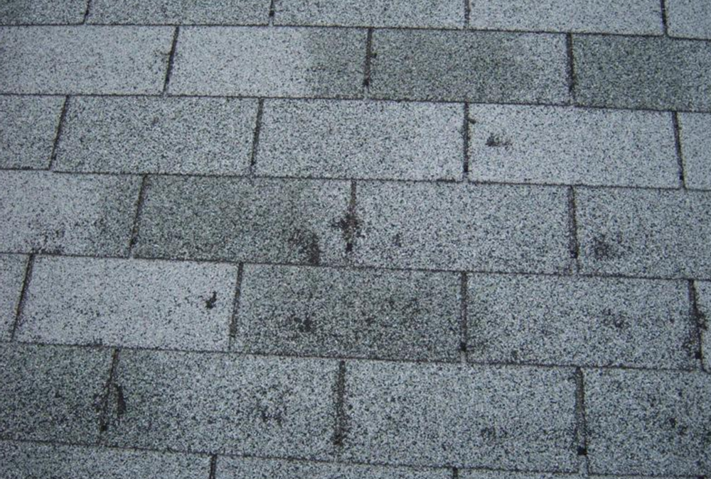 3 Major Signs of Shingle Damage That You Should Know