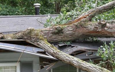Storm Damage in Atlanta